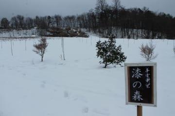 遊休農地に植樹された漆の苗木=二戸市浄法寺町