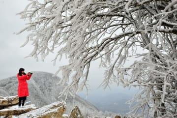霧氷の銀世界、観光客を魅了 湖北省保康県