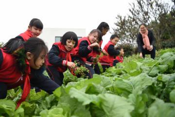 かやぶき小屋から環境配慮型校舎へ 重慶市新金帯小学校の変遷