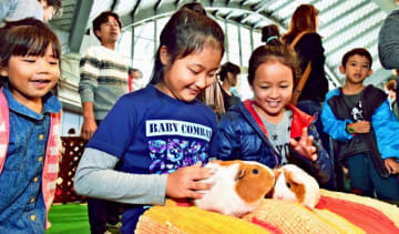 モルモットを優しくなでる子どもたち=9日午後、宜野湾市・沖縄コンベンションセンター展示棟