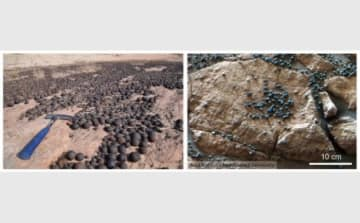 (左)米国ユタ州の「鉄コンクリーション」と(右)火星メリディアニ平原の「鉄コンクリーション」=「ブルーベリー」(画像: 名古屋大学の発表資料より)
