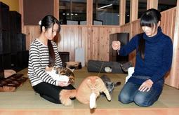 猫カフェをオープンさせる古川たまえさん(右)と直深さん=新温泉町湯