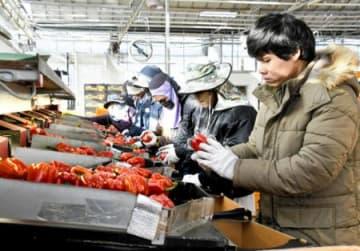 ICT導入し効率化 韓国農業の今/JA福島中央会視察研修(上)