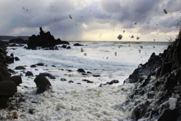 寒風に「波の花」ふわり舞う 佐渡・椿尾に冬の風物詩