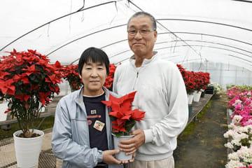 ポインセチアの新品種「クリスマスキャンドル」を開発した山下晴義さんと妻の和子さん=玉名市