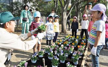 パンジーの植え方を学ぶ園児