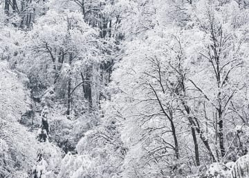 うっすら雪化粧 中国各地から雪の便り届く