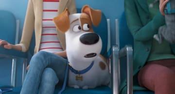 『ペット』最新作(C)Universal Studios.