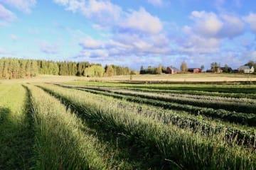 体と心が浄化される、フランシラ・オーガニックハーブ農園【フィンランド式幸せになるヒントを探して】