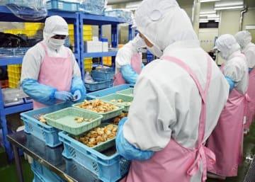 東南アジアの外国人技能実習生を採用する青森市の水産加工会社。水産加工は、機械でできない部分が多く、人手の確保は絶対必要だという=11月末