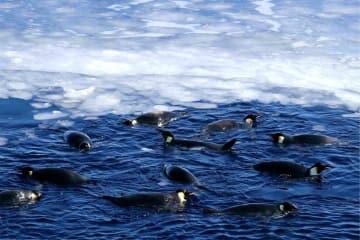 「雪竜号」のそばにペンギンが出没 南極