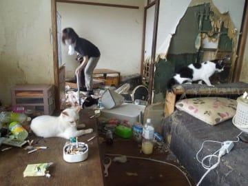 ボランティアが猫の救出に向かった「多頭飼育崩壊」の現場。一人暮らしの男性の部屋で73匹を保護した=2017年8月、海老名市