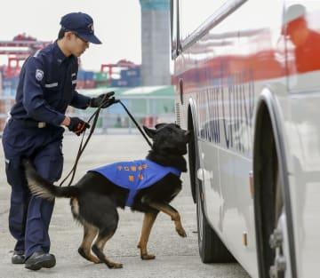 バスを調べる爆発物探知犬「アイゼン号」=14日午前、大阪港