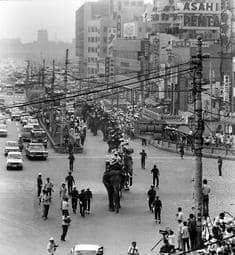 神戸の中心街を行進する16頭のゾウ=1970年8月3日、神戸・三宮