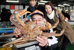 香住漁港で水揚げされた重さ2・06キロの巨大マツバガニ=兵庫県香美町香住区香住