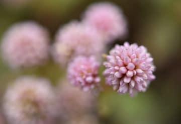 冬を彩る草花