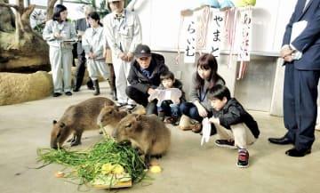 カピバラ3匹の名前が決まった命名式=12月15日、福井県福井市足羽山公園遊園地の新動物舎「ハピジャン」