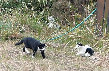 空き地や駐車場などに猫のたまり場が多い(写真はイメージ)