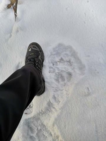 吉林省舒蘭市で野生アムールトラの足跡 専門家は活動範囲の拡大を指摘