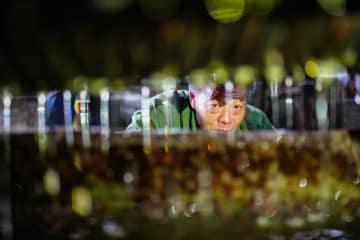 伝統的な茶油搾りが開始 広西チワン族自治区竜勝