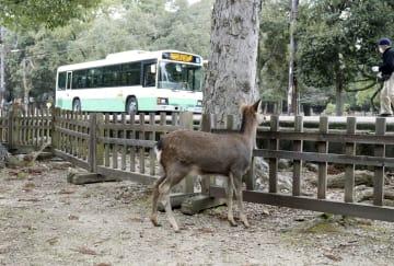 奈良公園に設置された、シカが道路を横断しないための柵=20日午前、奈良市