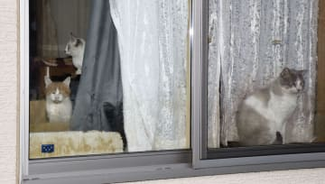入居者が死去した後も災害公営住宅で飼われ続けている猫=20日、宮城県気仙沼市