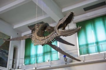 珍しい首長竜の骨格化石レプリカが一般公開 アルゼンチン
