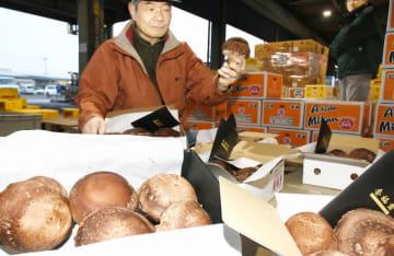 高値で競り落とされた「香福茸」=12月21日、福井県越前市矢船町の武生青果