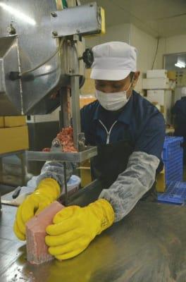 マグロの切り分けなどでフル稼働する「カスガ水産」の工場