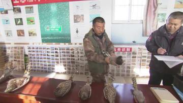 中国二級重点保護動物の猛禽類4種を放鳥 河北省唐山市