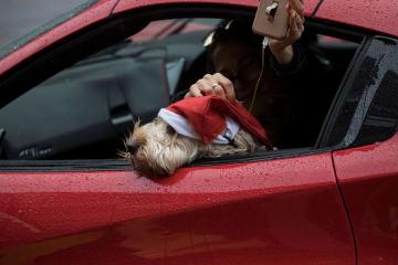 ロンドンで、サンタクロースの帽子をかぶり車から顔を出す犬=15日(ロイター=共同)
