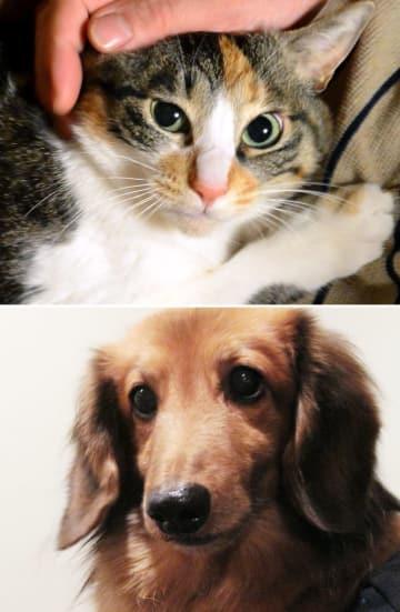 家族の一員として愛されている猫と犬