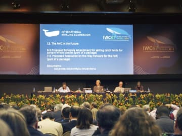 クジラ保護推進のための宣言を採択した国際捕鯨委員会(IWC)総会=9月、ブラジル・フロリアノポリス(共同)