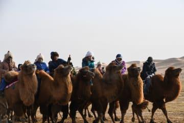 「ラクダのナーダム」開幕 内モンゴル自治区
