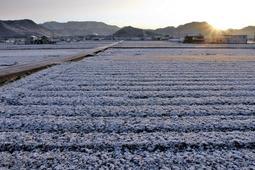 最低気温氷点下3・5度を記録し、雪化粧をした平地=西脇市坂本
