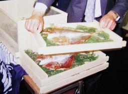 平成の大嘗祭で献上された丸山の干し鯛