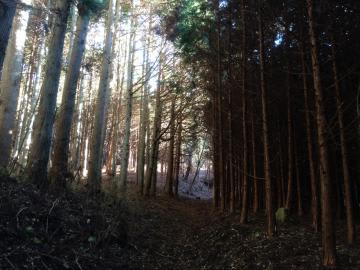 中央の道を挟んで右側は手入れされていない森林。左側は間伐が行われ、木が順調に生育している=常陸太田市内