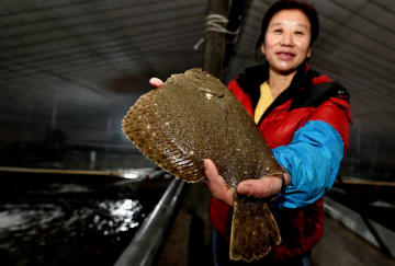 水産養殖の工場化で漁民の増収後押し 河北省楽亭県