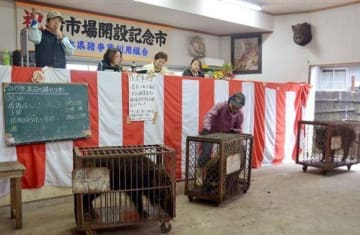 生きたイノシシが取引された生体市場の初競り=多良木町