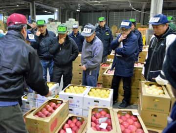 初競りで県産リンゴを品定めする関係者ら