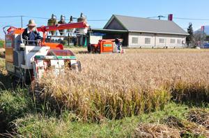 たわわに実った飼料米を収穫するえびの市の農家