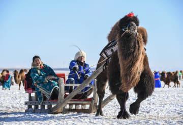 ラクダの文化祭開催 内モンゴル自治区ヘシグテン旗
