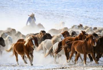雪原を疾走する馬の群れ 内モンゴル自治区