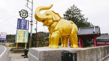 長福寿寺の門前に降臨した「金色に輝く吉ゾウくん」の像
