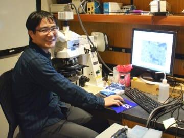 研究室で細胞を観察する佐二木健一博士(OIST提供)