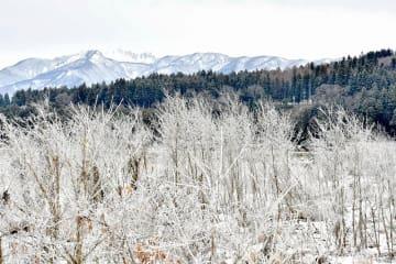 厳しい冷え込みで草木を白く覆った霧氷=1月10日、福井県大野市御給