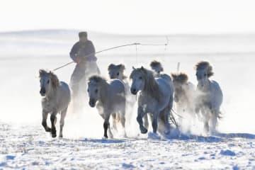 牧畜民が雪原で馬馴らし 冬季観光シーズン迎えた内モンゴル