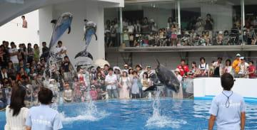 大勢の観客の前で見事なジャンプを披露する3頭のイルカ=九十九島水族館