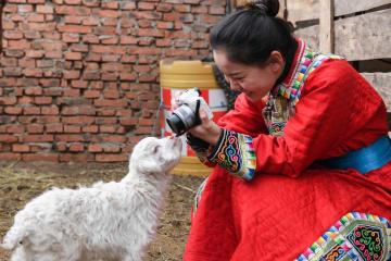 故郷の放牧地での生活を撮影しネット有名人に 内モンゴル自治区