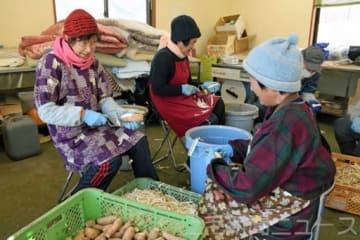 干し芋を作る組合員ら